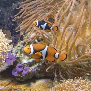 The Nemo Fish